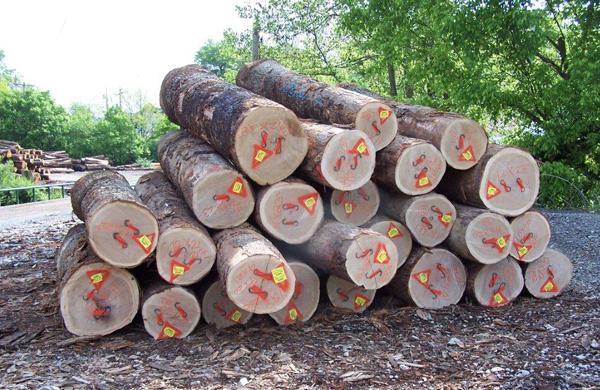 :: gỗ tròn, gỗ xẻ Mỹ vùng Appalachian ::