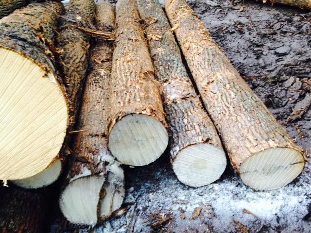 ►bán gỗ Thông- Sồi - Tần Bì - Óc Chó - Thích - Anh Đào - Hickory